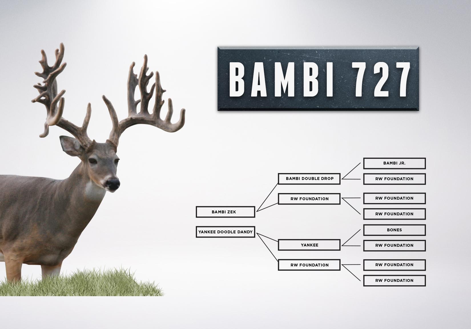 Chart_Bambi727