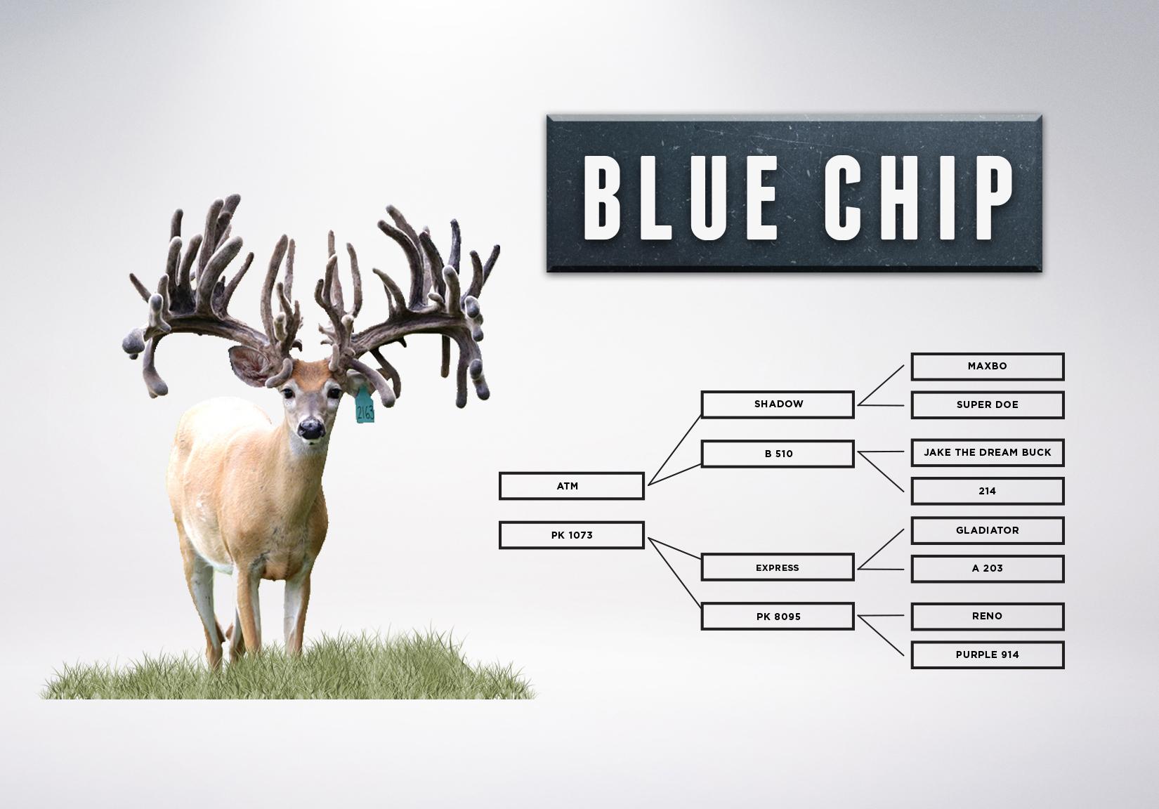 Chart_BlueChip