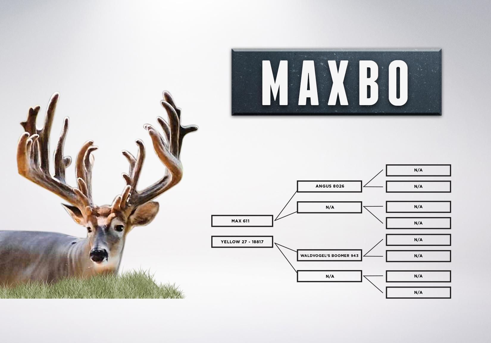 Chart_Maxbo