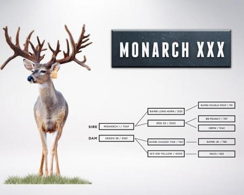 monarchlineage